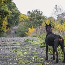 pyometra-bij-honden