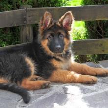 vachtverzorging-hond