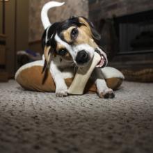 waarom-sloopt-mijn-hond