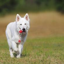 het belang van spelen met je hond