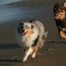 met je hond naar het strand