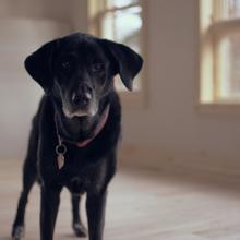 redenen-ontlasting-eten-hond