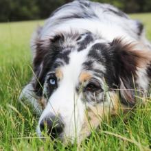 depressie-bij-honden