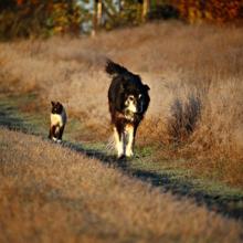 vlooienallergie bij hond en kat