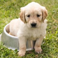 puppy-zindelijk-maken