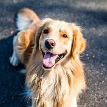 spijsverteringsproblemen-hond-kat