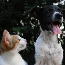 goede voeding voor honden en katten