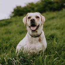 hond-eet-gras-wat-te-doen