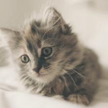 kitten-benodigdheden