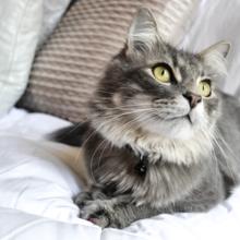 zindelijkheid bij katten