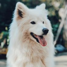 overgeven-bij-honden