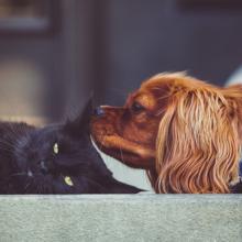 visolie-omega-3-hond-kat