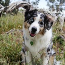 allergie-bij-honden