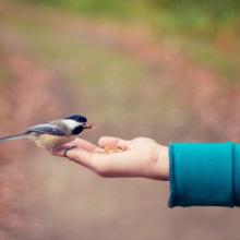 buitenvogels-voeren