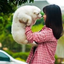 doggy-dance