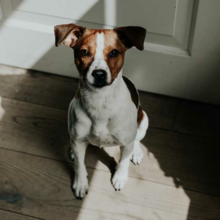 hond-diarree