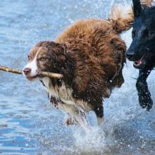 oververhitting-hond