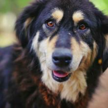suikerziekte-bij-honden