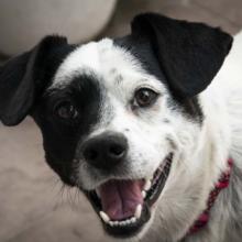 gebit-verzorgen-hond