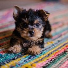 spelen-met-je-puppy