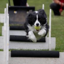 sporten-met-je-hond