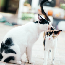 tweede-kat-erbij
