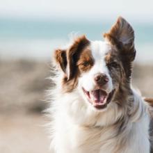 blaasgruis-bij-honden