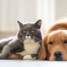 diabetes-bij-honden-en-katten