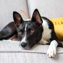 gewrichtsproblemen-bij-honden