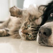 nierproblemen-honden-en-katten